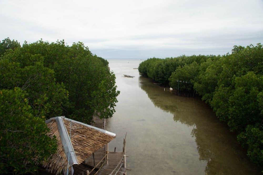 omagieca obo-ob manglar bantayan