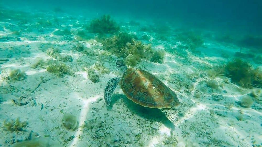 itinerario 13 días en Filipinas: snorkel Port Barton
