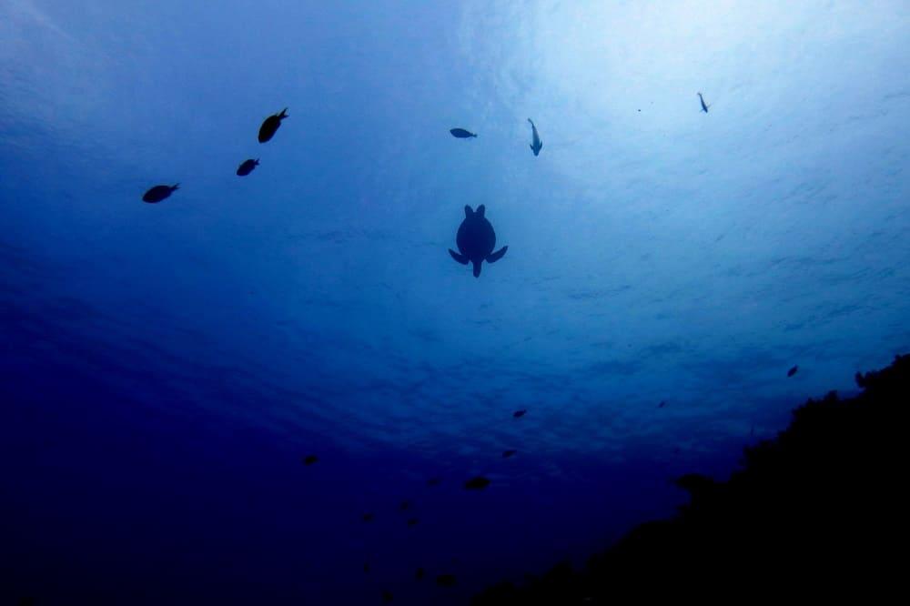 snorkel en Filipinas: Bohol