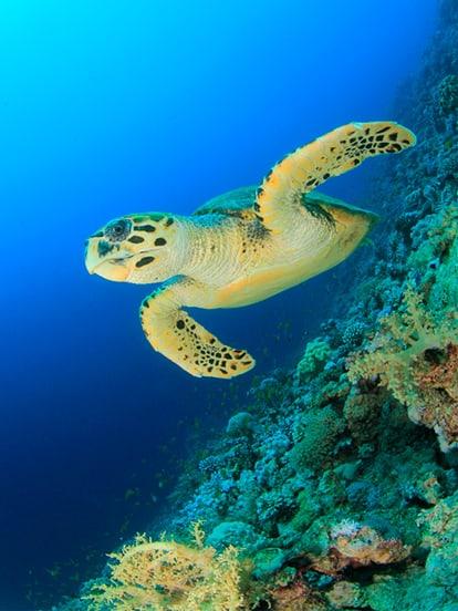 buceo y esnorquel en Cebu