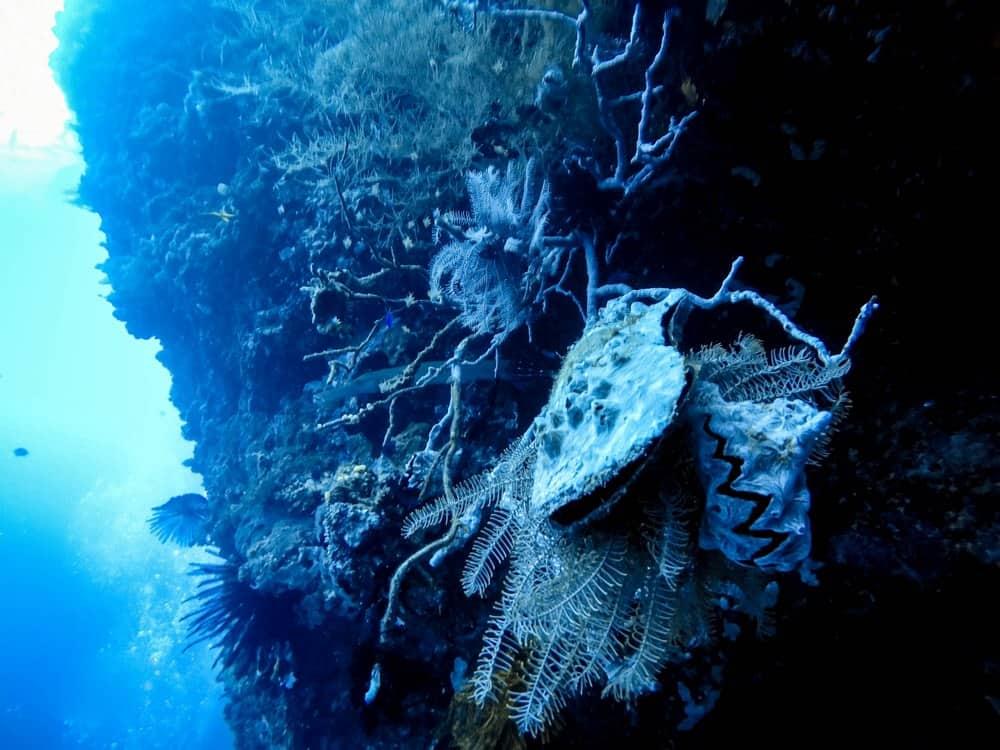 buceos pared panglao