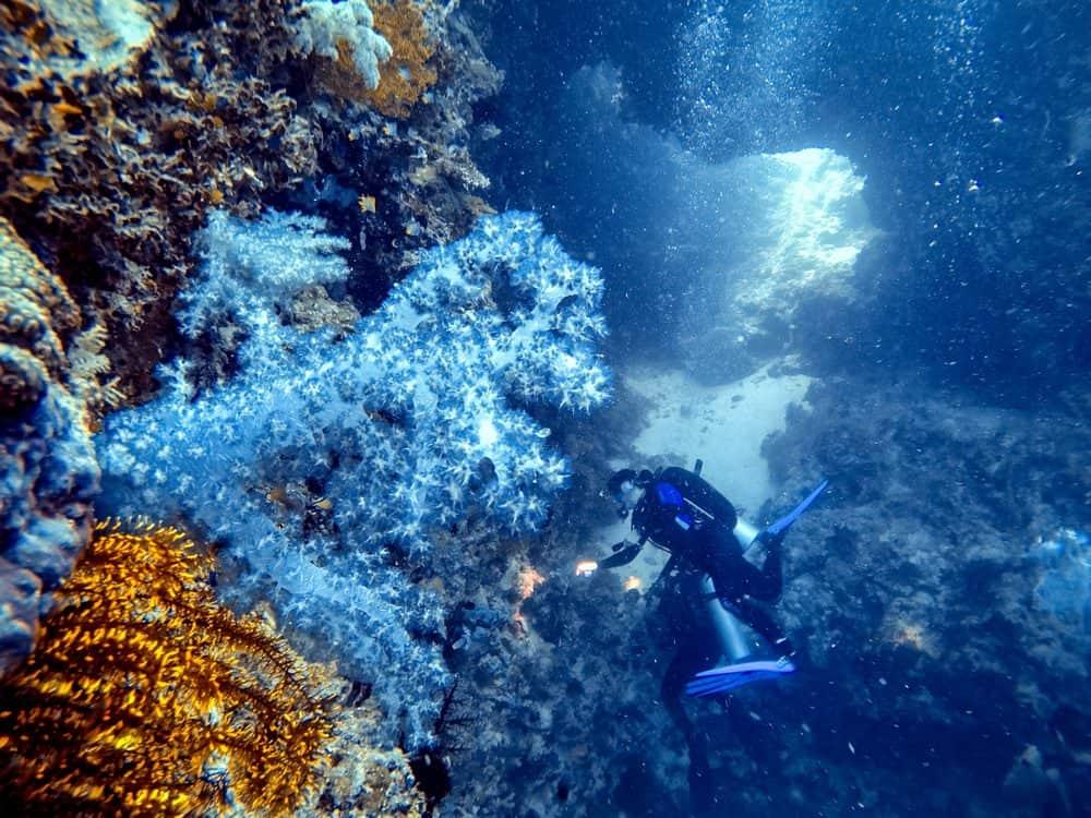 corales buceo en panglao