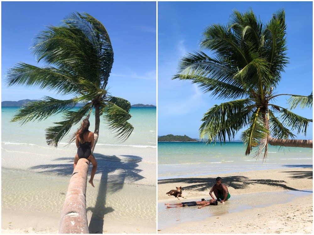 palmera de Pamuayan Beach