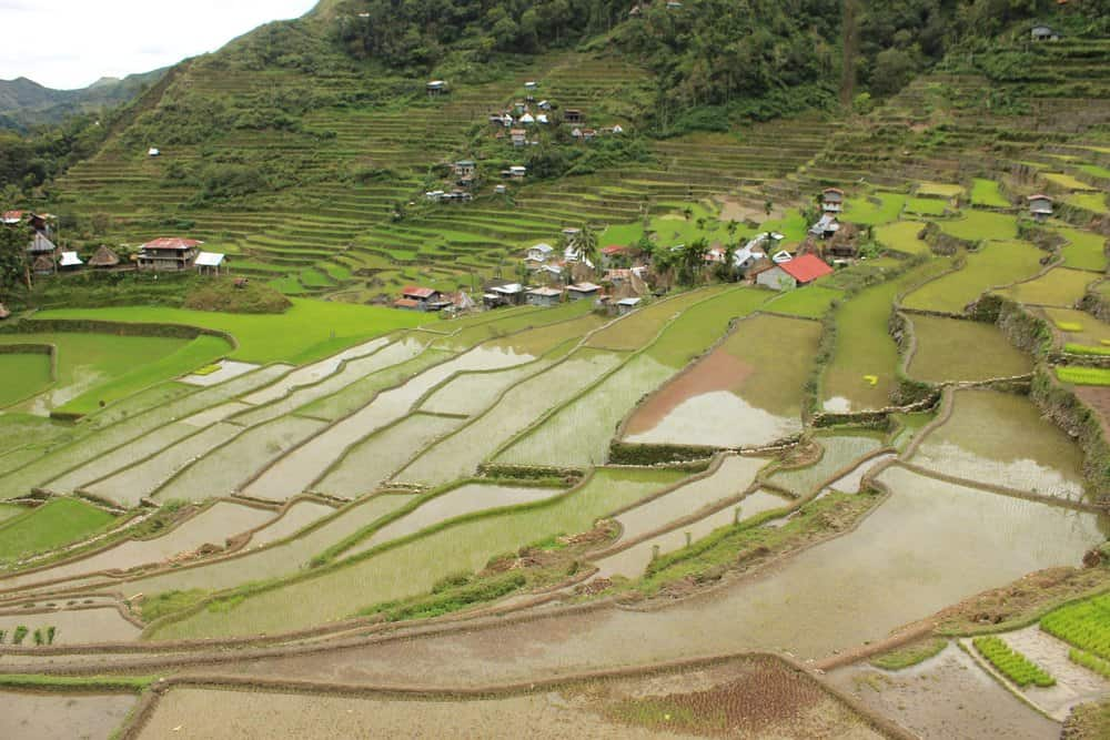 arrozales de Batad