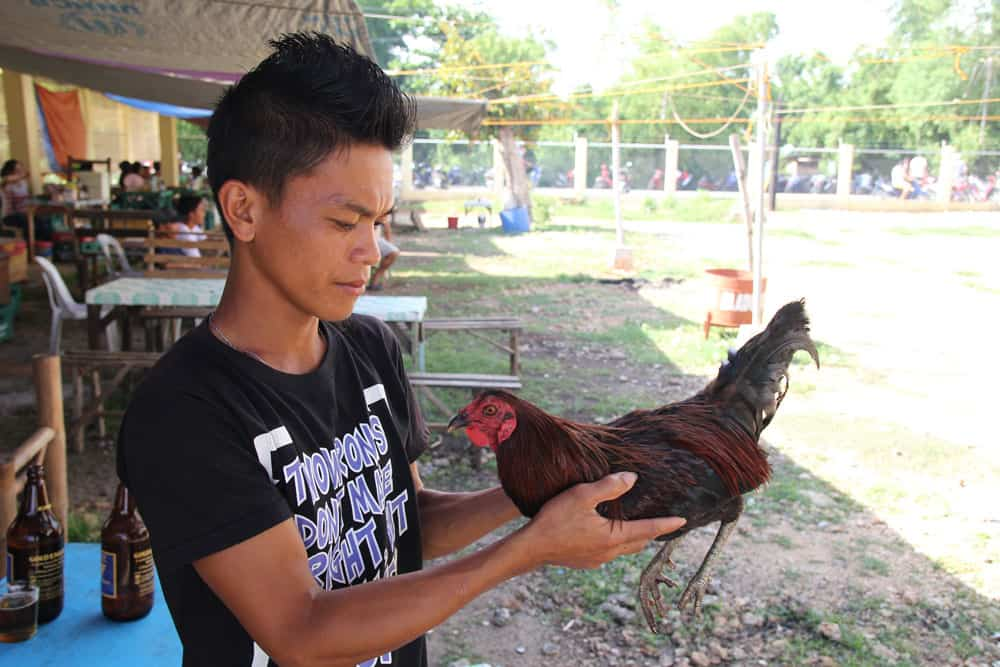 peleas de gallos en Filipinas