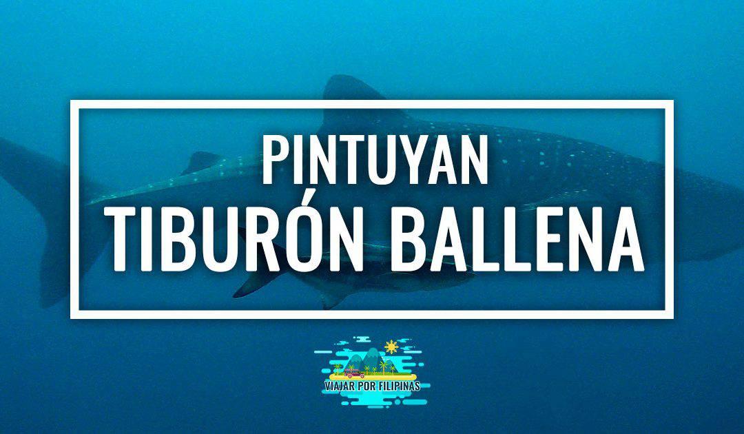 Tiburón ballena en Pintuyan