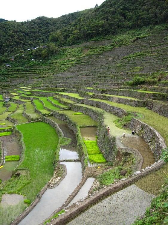 perspectiva arrozales de Batad