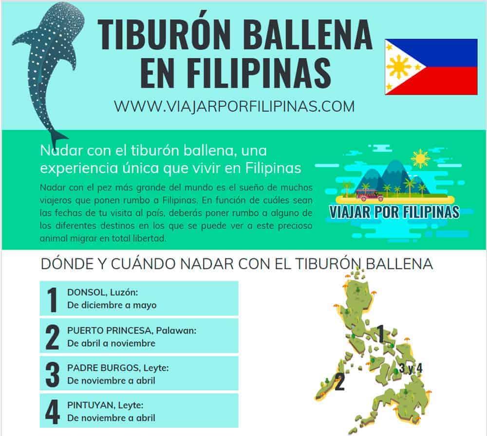 temporadas tiburón ballena en filipinas