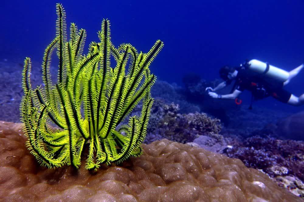 buceo, una de las cosas que hacer en Apo Island