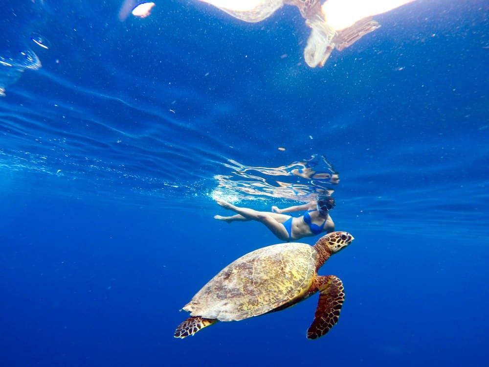 snorkel en apo island tortuga