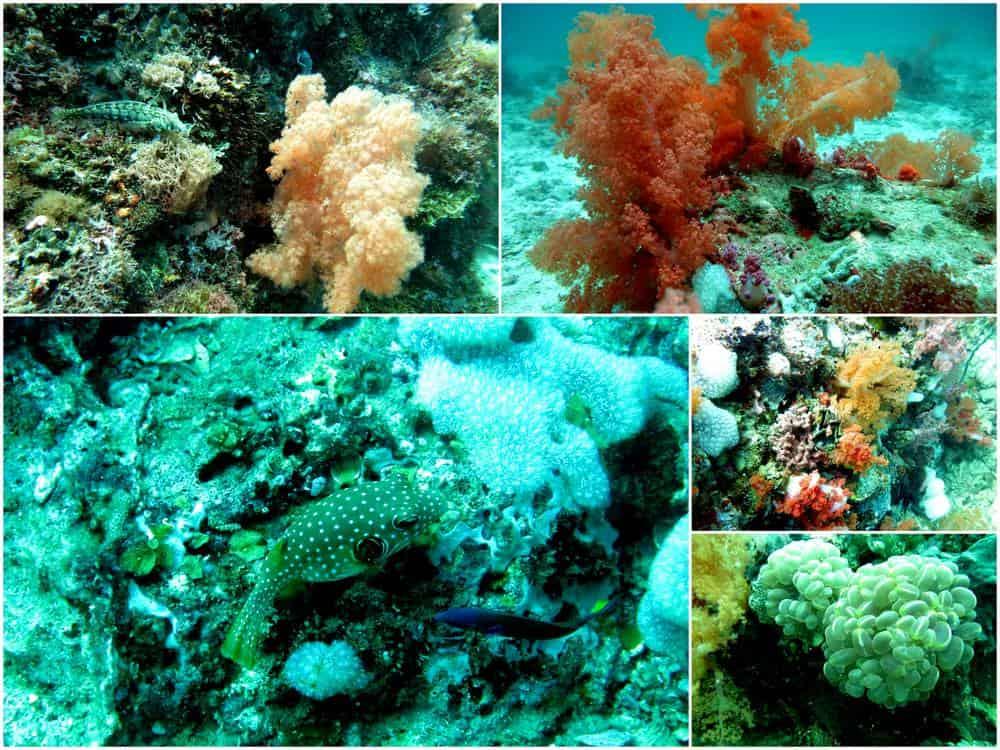 buceo macro malapascua