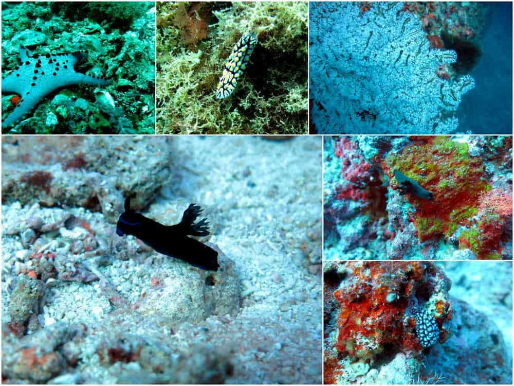 muck diving malapascua