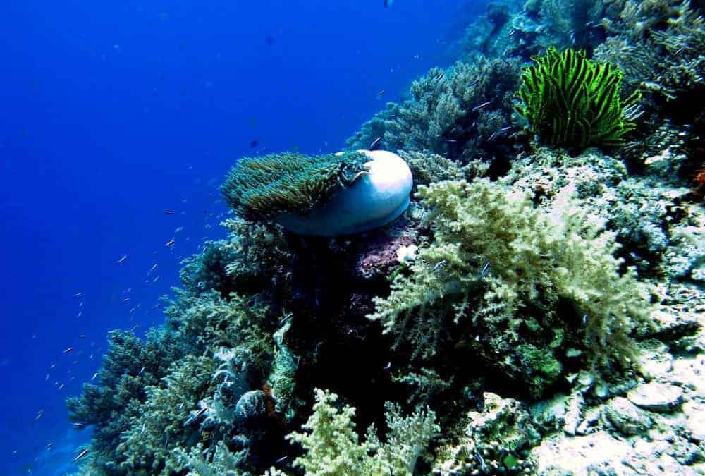 arrecifes y anémonas bohol