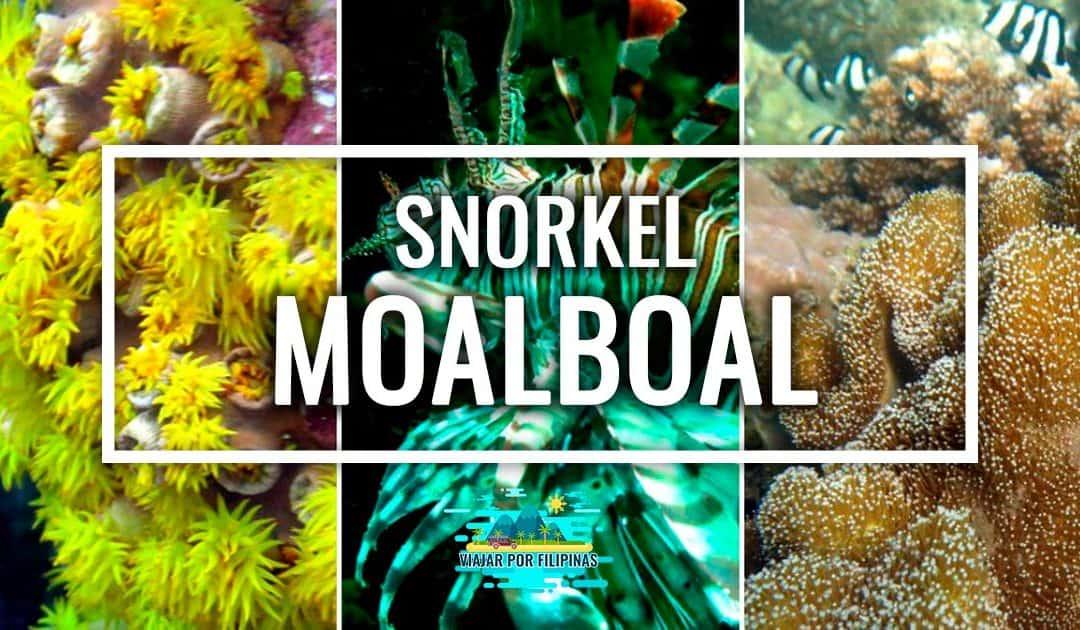 snorkel con sardinas en Moalboal