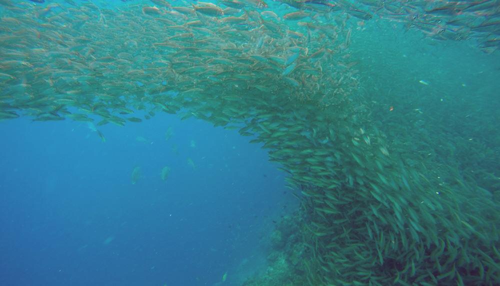 snorkel en Bohol