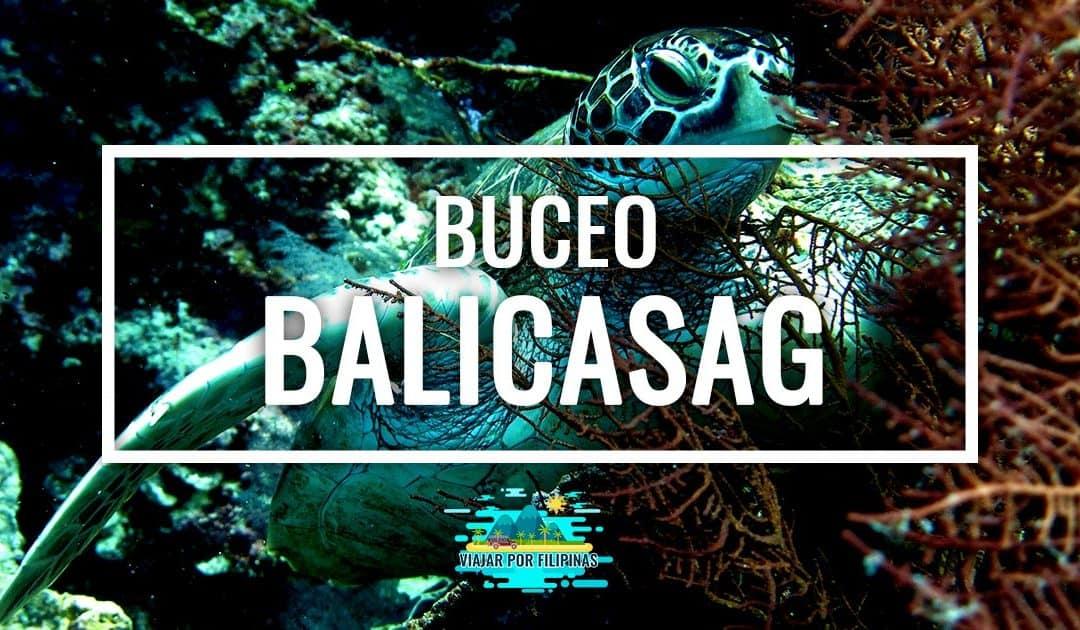 Bucear en Balicasag